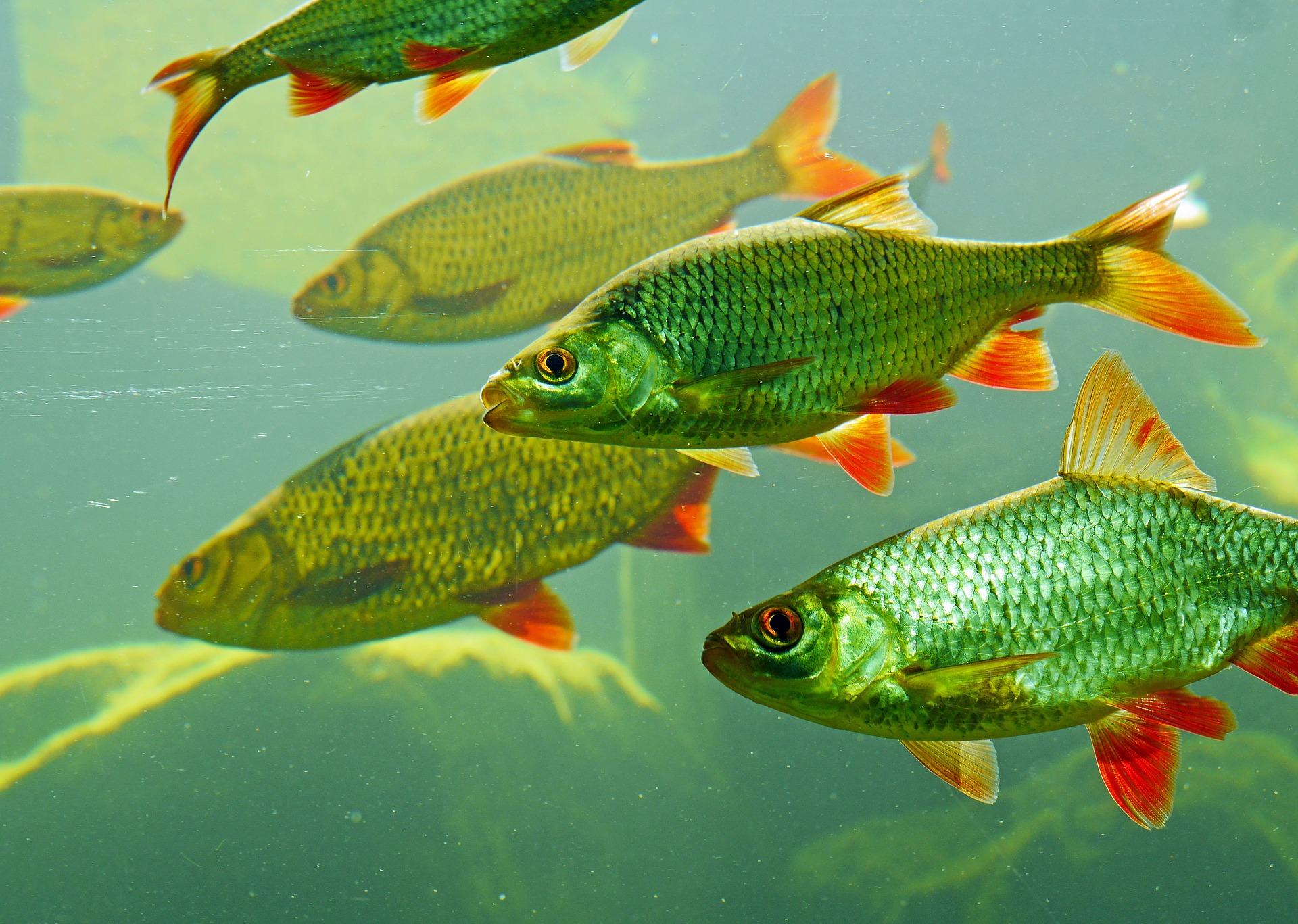 Vilka fiskarter får fångas?