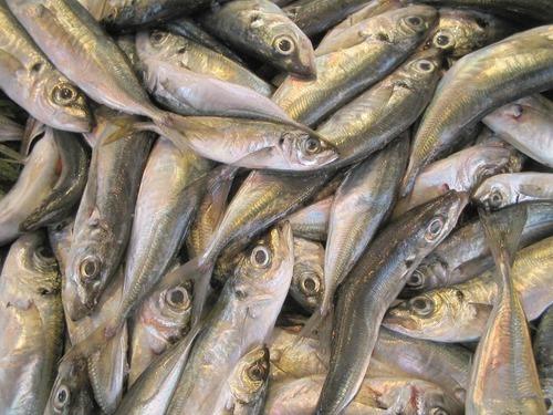 Få upp rätt fisk